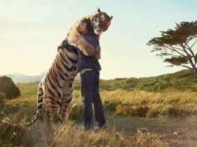 Обои Обнимашки с тигром: Тигр, Объятия, Дружба, Настроения