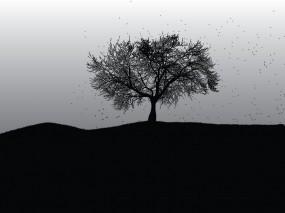 Обои Мертвое дерево: Дерево, Black, Dark, Настроения