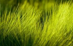 Обои Макро трава: Фото, Трава, Макро, Растения