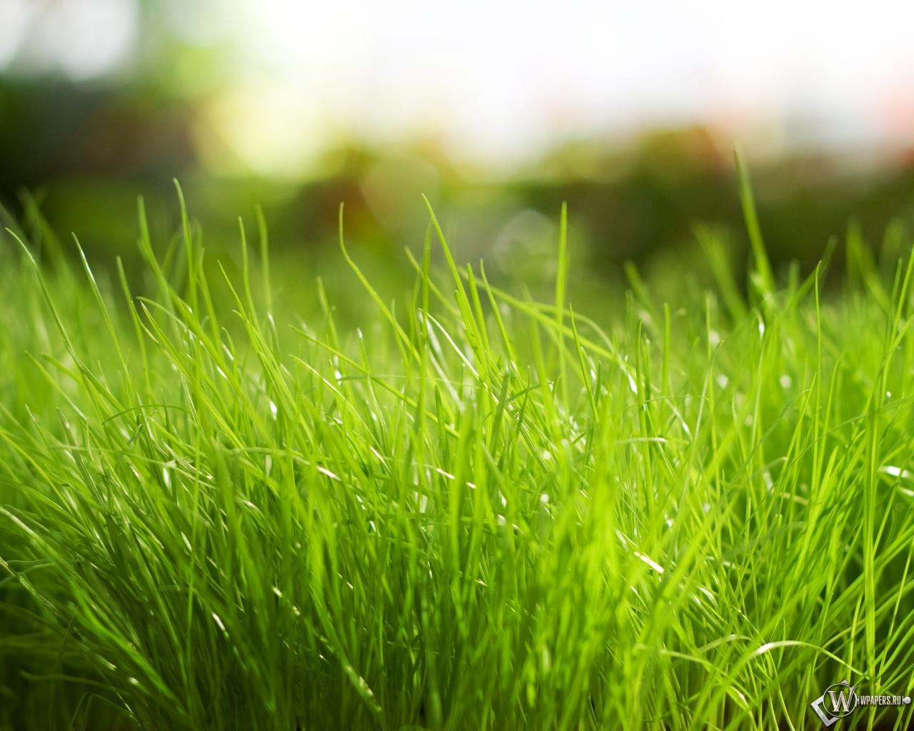 Обои трава природа трава зелёный