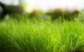 Обои Трава: Природа, Трава, Зелёный, Растения