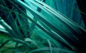 Обои Листья травы: Зелёный, Листья, Растения