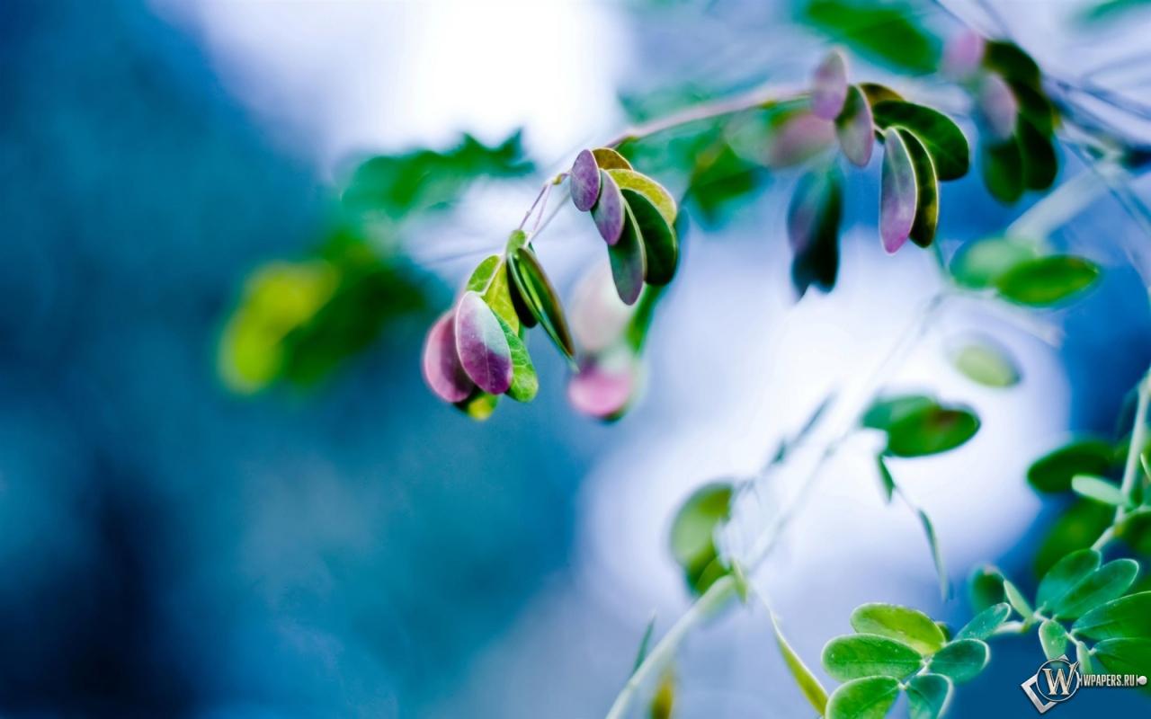 ... обоев 152 листья обоев 111 весна обоев 55: wpapers.ru/wallpapers/Plants/11384/1280-800_Весенние...