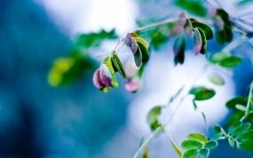 Обои Весенние ягоды: Ягоды, Растение, Ветка, Макро, Листья, Весна, Растения