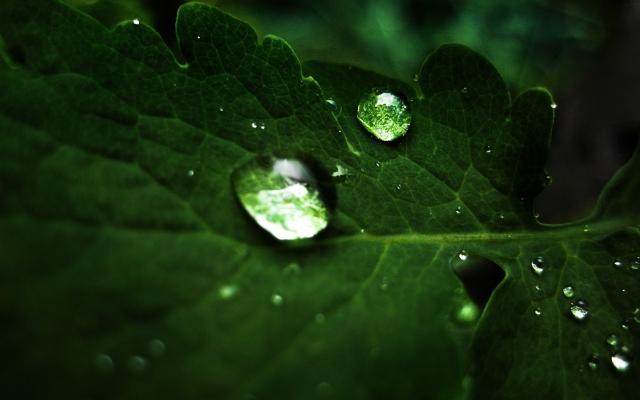 Капля на зелёном листе