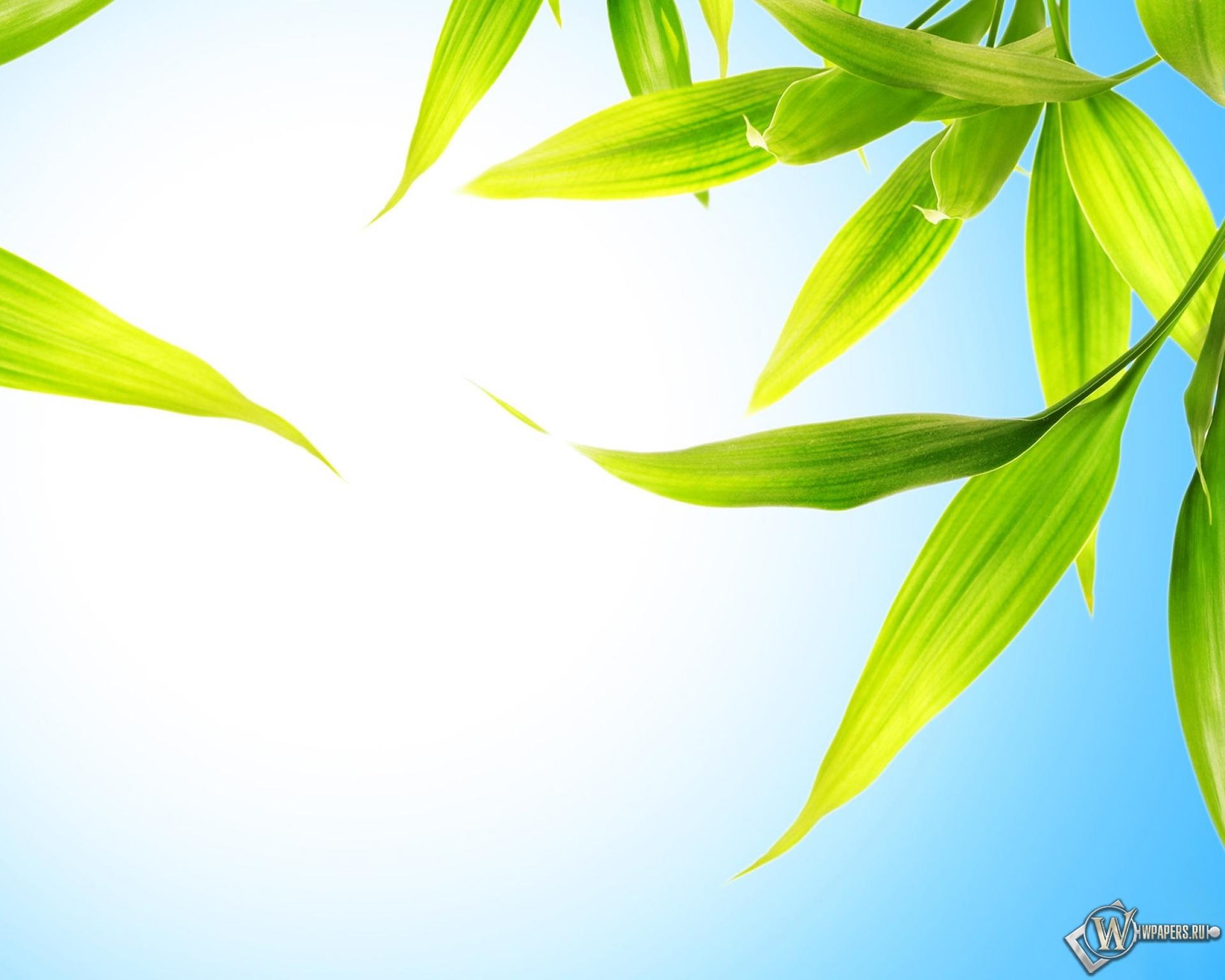 Желто-зеленые листки  № 3114813 бесплатно