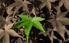Обои Будь не как все: Лес, Осень, Лист, Парк, Улица, Растения