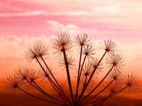 Обои Colors of life: Закат, Растение, Небо, Растения