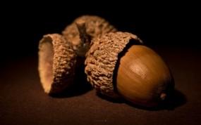 Обои Жёлуди: орехи, Желудь, коричневый, Растения