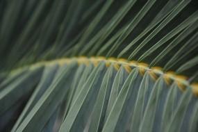 Обои Лист папоротника: Зелень, Стебель, Папоротник, Растения