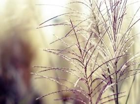 Обои Нежность: Поле, Нежность, Травка, Растения