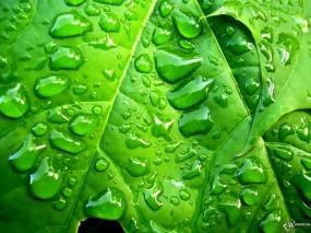Обои Лист в капельках дождя: , Растения