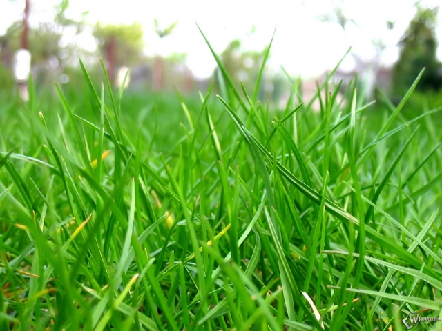 Травка на газоне