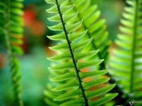 Обои Ствол папоротника: , Растения