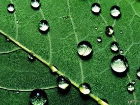 Обои Капли на листе: , Растения