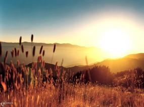 Обои Колосья в лучах солнца: Свет, Солнце, Колосья, Растения