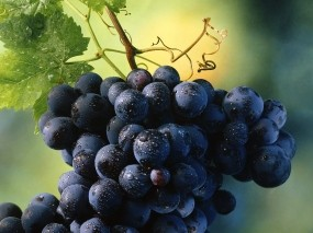Обои Гроздь винограда: Ягоды, Виноград, Гроздь, Вино, Растения