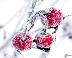 Обои Зимняя вишня: Иней, Ягода, Вишня, Холод, Растения