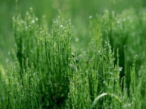 Обои Трава: Капли, Роса, Трава, Макро, Зелёный, Растения