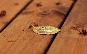 Обои Капли на листе: Лист, Роса, Макро, Капля, Доски, Растения