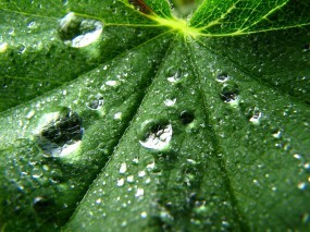 Обои Лист: Капли, Лист, Макро, Зелёный, Растения