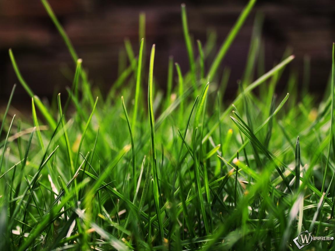 Зеленая трава фото обои и картинки на рабочий стол скачать