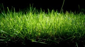 Обои Зеленая трава: Трава, Растения