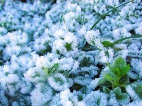Обои Иней на траве: Лёд, Иней, Растения
