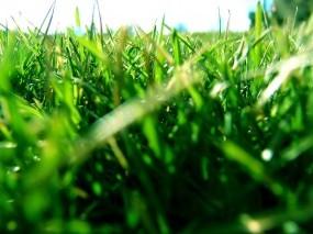 Обои Трава: Трава, Газон, Макро, Растения