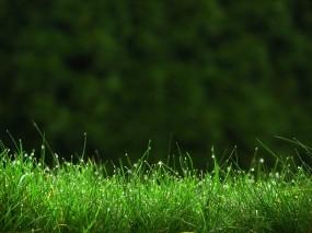 Обои Капли на траве: Капли, Трава, Газон, Растения