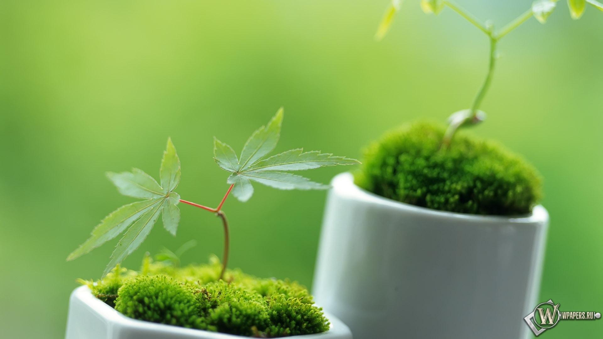 Обои маленькие декоративные растения