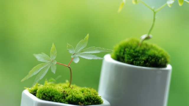 Зелёный растения растения