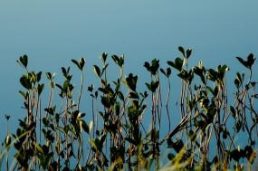 Обои Кувшинки: Кувшинки, Растения