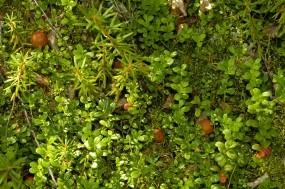 Обои Грибы в лесу: Зелень, Грибы, Растения