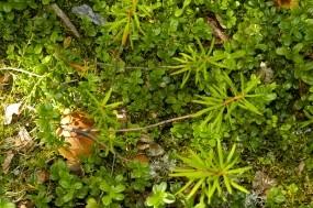Обои Белые грибы: Зелень, Грибы, Растения