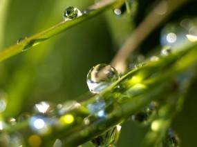 Обои Роса на траве: Капли, Роса, Трава, Растения