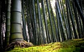 Обои бамбук: Япония, Бамбук, Киото, Бамбук