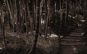Обои Бамбуковый лес: Лес, Бамбук, Бамбук