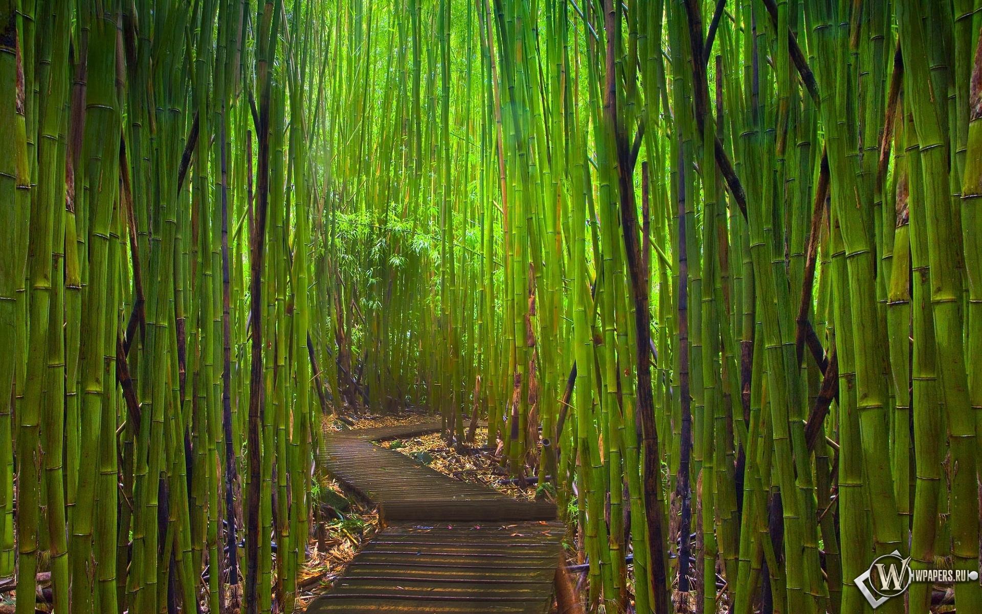 Бамбуковый лес Киото Япония 1920x1200
