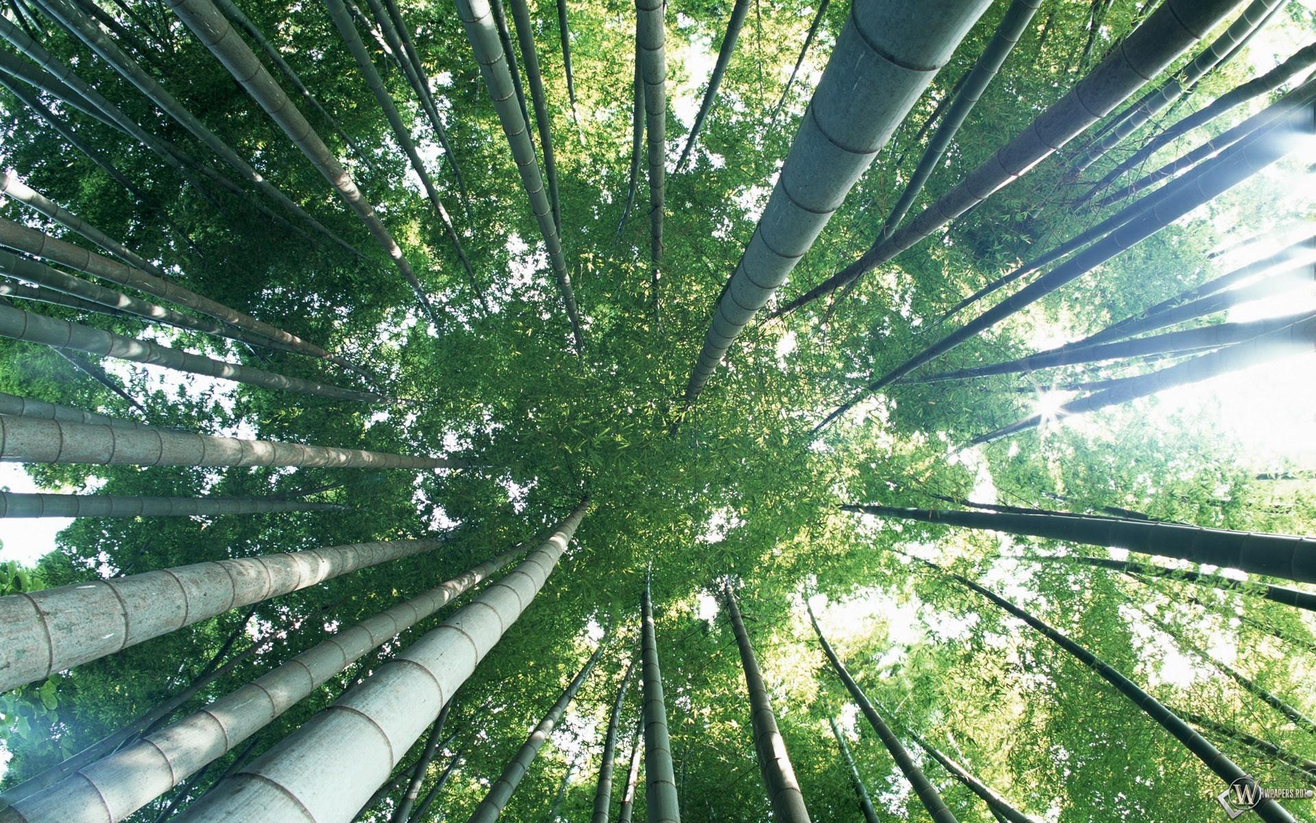 Бамбуковый лес 1920x1200