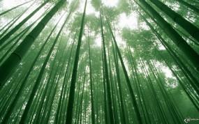 Обои Бамбуковый лес: , Бамбук