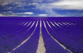 Обои Лавандовые поля Прованс Франция: Франция, Поля, Цветы, Лаванда, Цветы