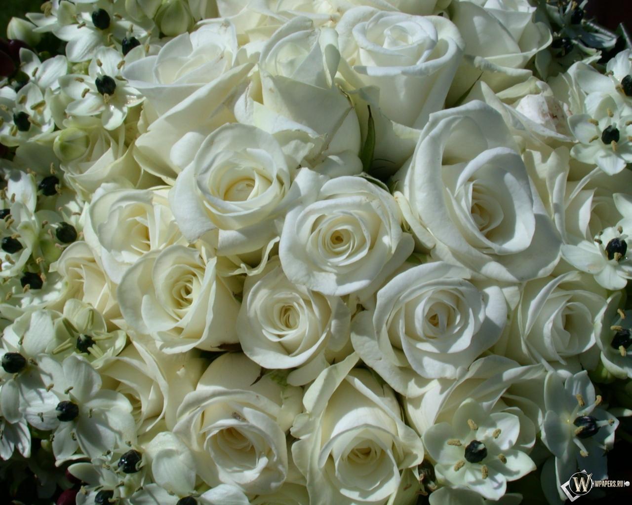 White Rose Memorial Essays