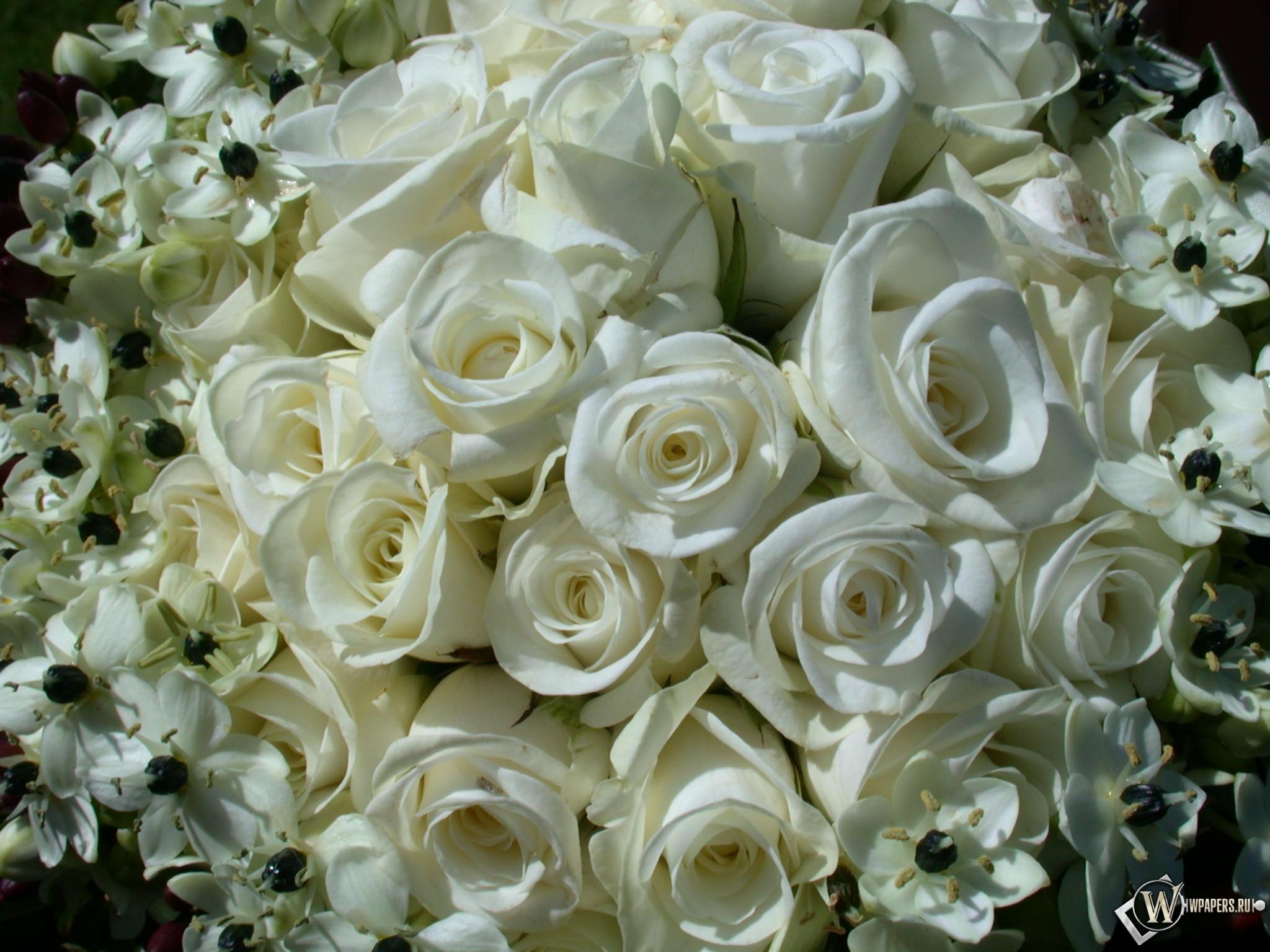 White Roses 2048x1536