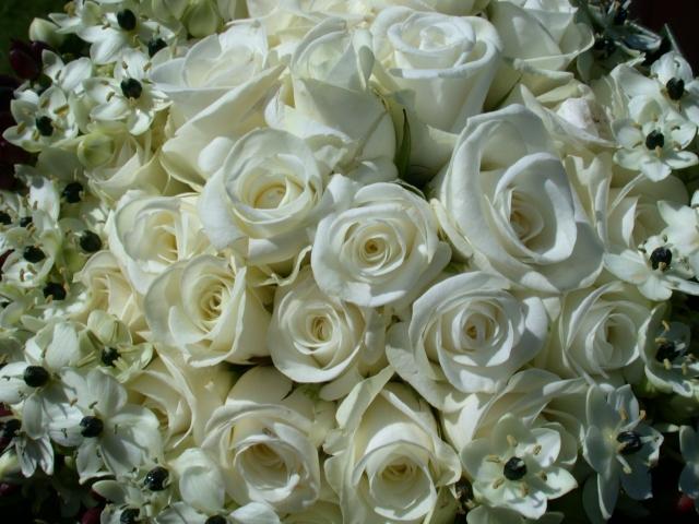 Цветы  розы букеты белые