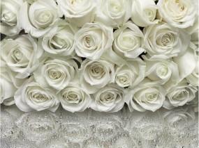 Обои Много белых роз: Белые розы, Цветы