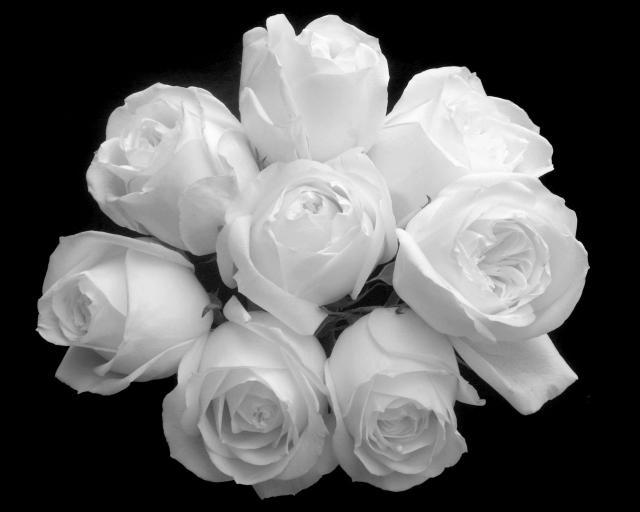 Чёрный фон букет белые розы цветы