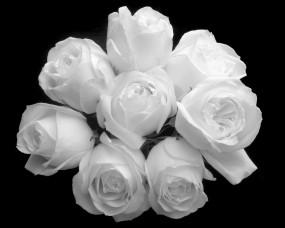 Обои Букет белых роз: Чёрный фон, Букет, Белые розы, Цветы