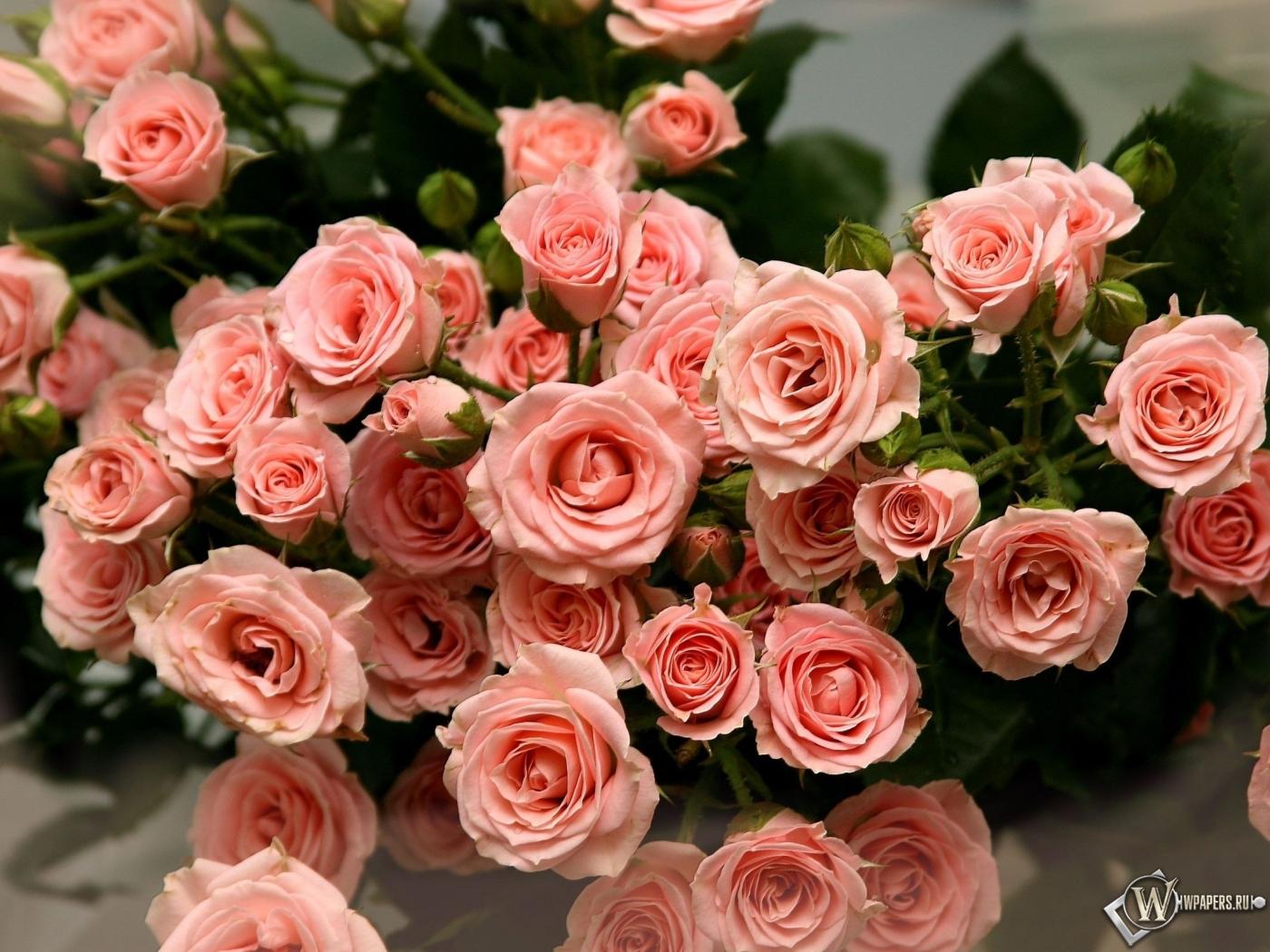 Обои букет роз лепестки розы букет