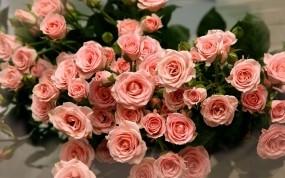 Обои Букет роз: Лепестки, Розы, Букет, Цветы